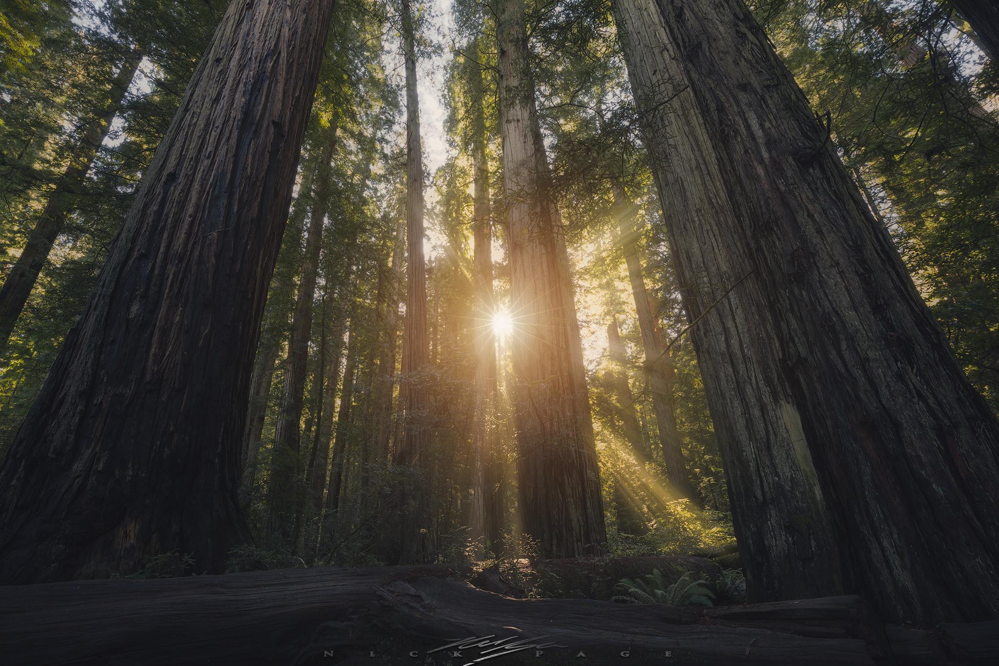 redwoods-sun.jpg
