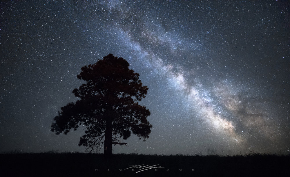 lonely-tree-under-the-stars.jpg