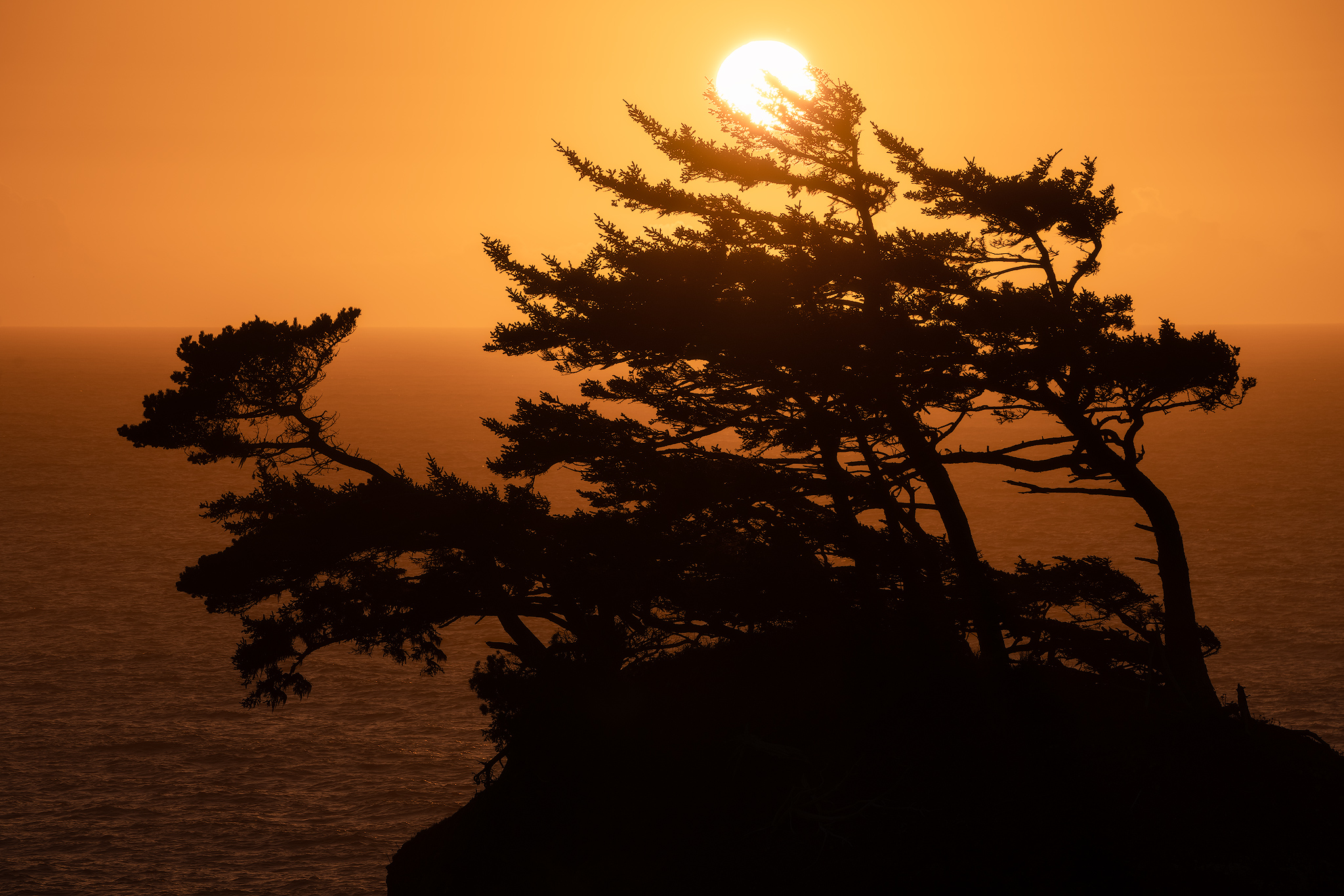 bent-tree-sunset.jpg