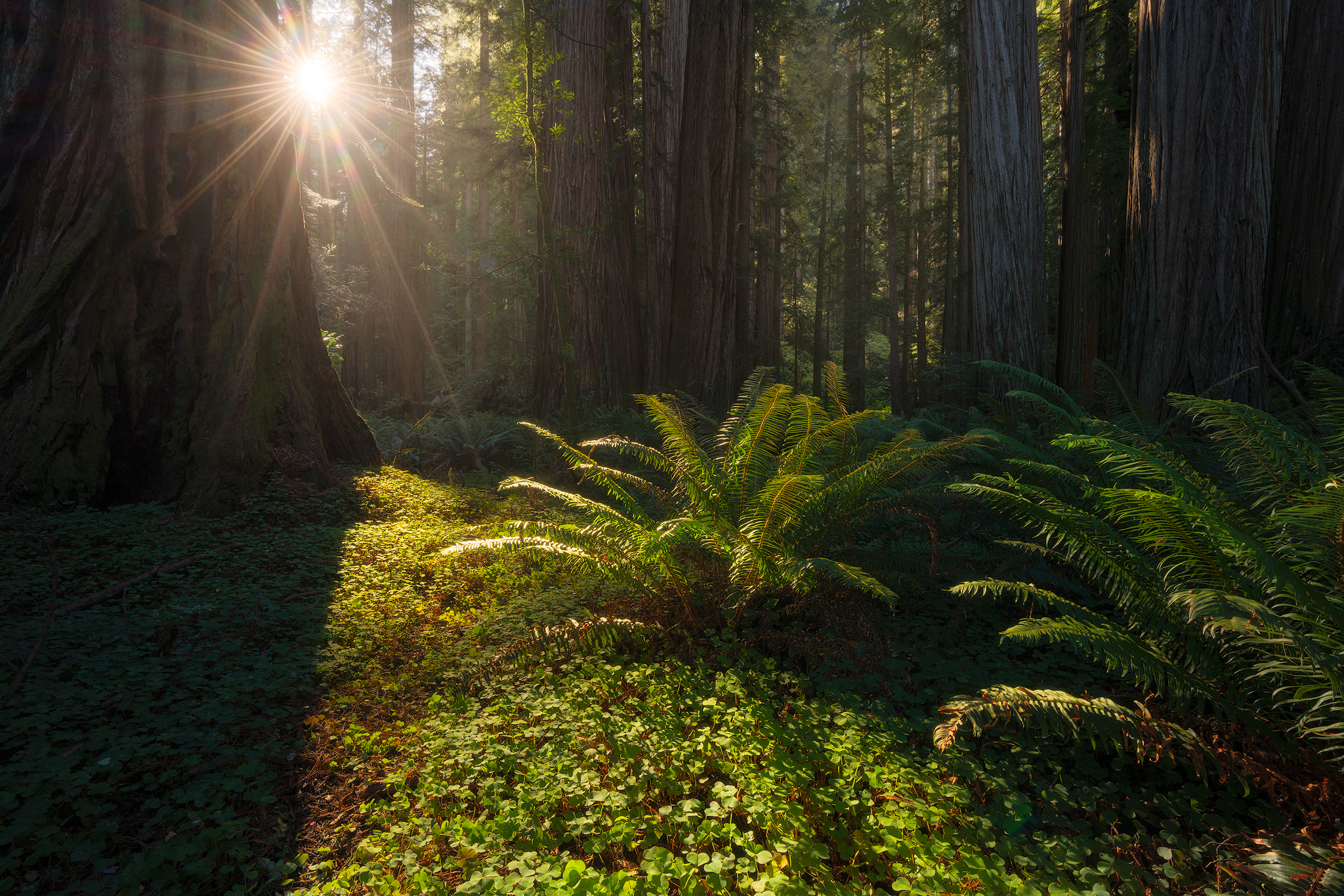 sun-in-the-forest.jpg
