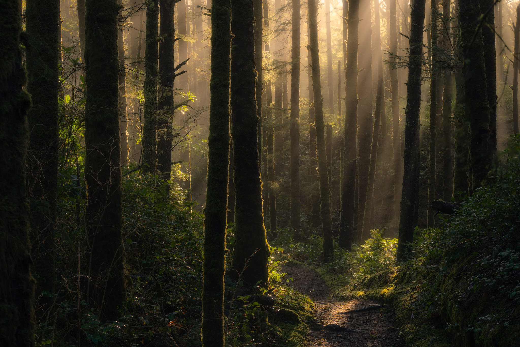 mistborn-forest.jpg
