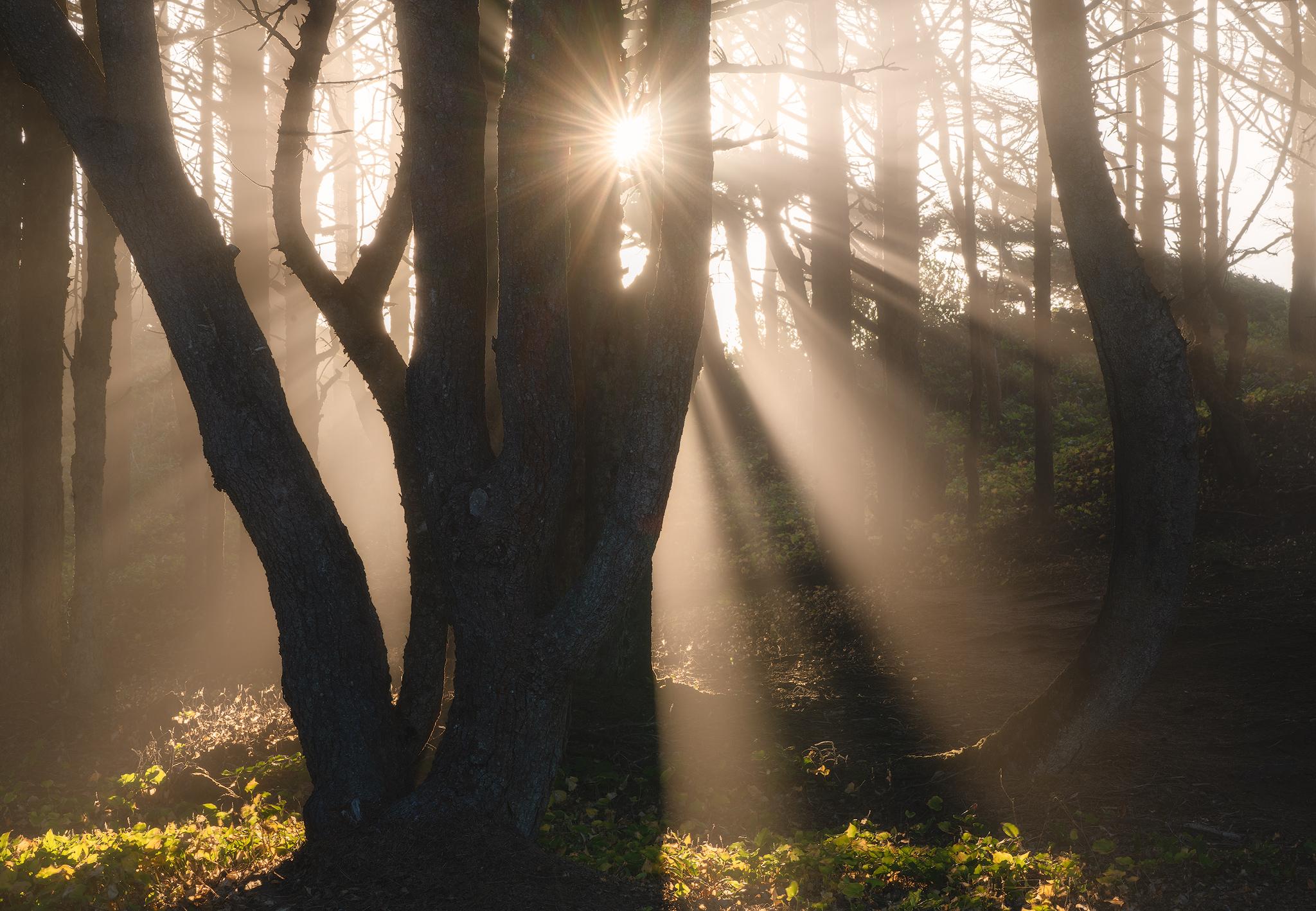 mystical-forest.jpg