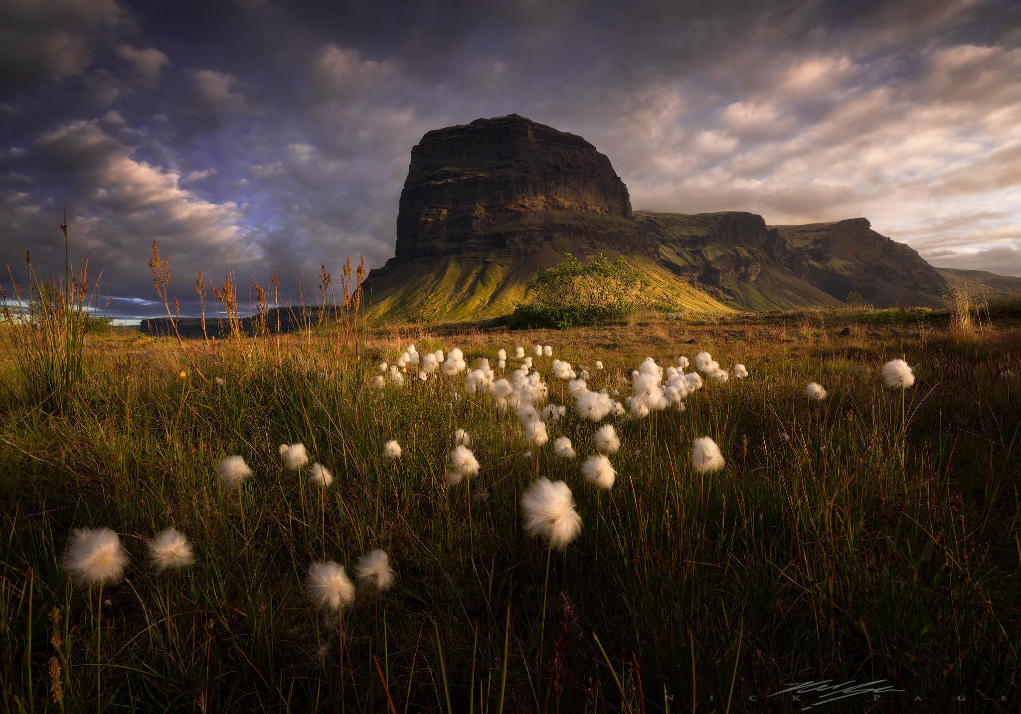 Iceland-Puff-flowers.jpg