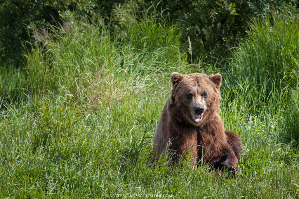 bear-slide-1024x683.jpg