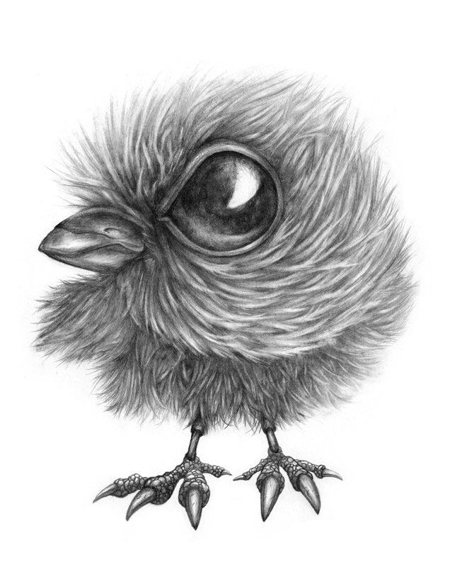 Messy Baby Crow
