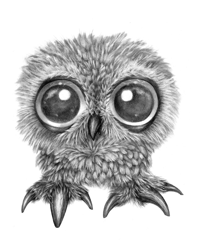 Messy Baby Owl