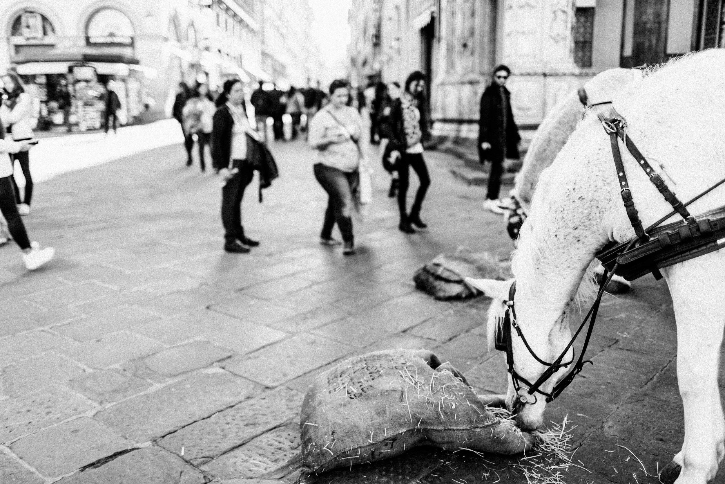 ITALY2015-252-13.jpg