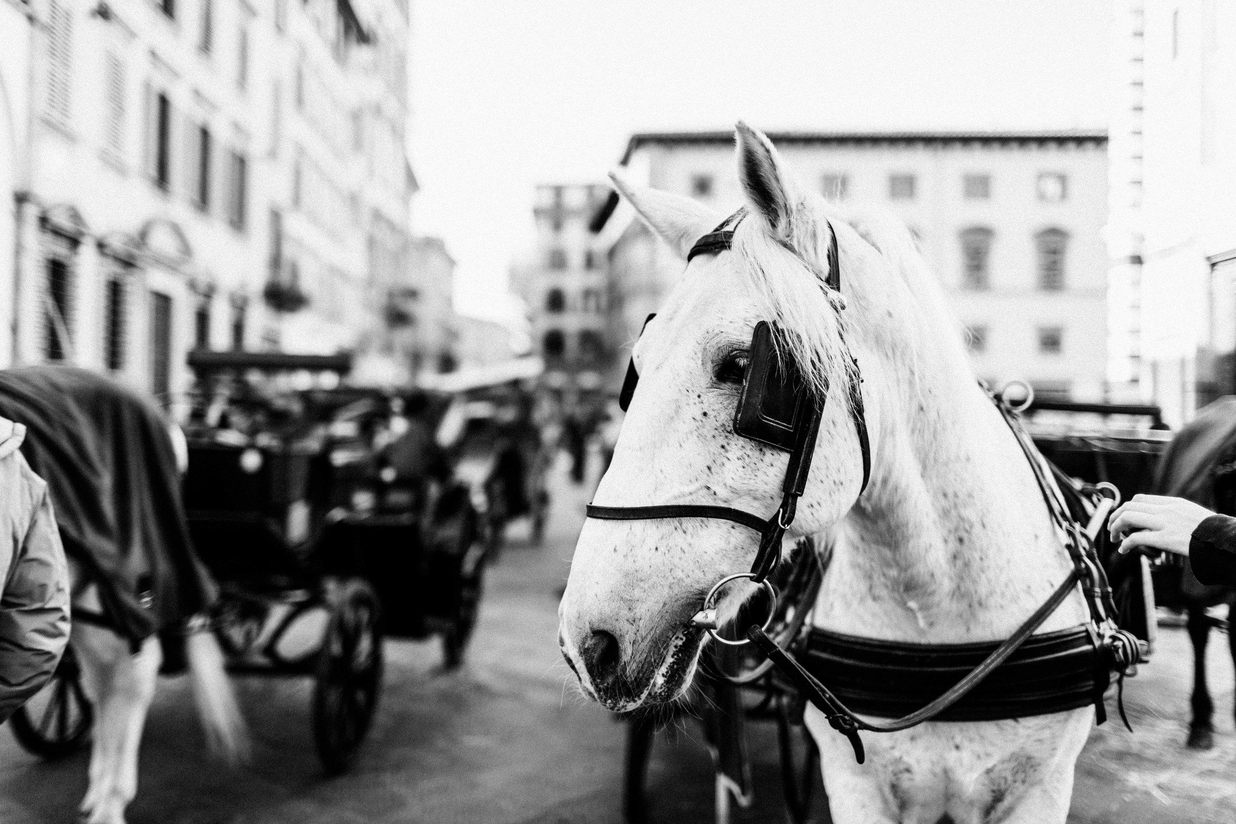 ITALY2015-493-11.jpg