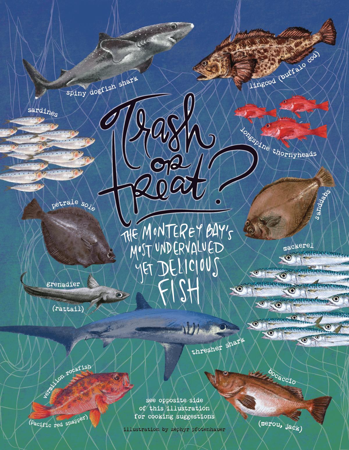 trash fish guide