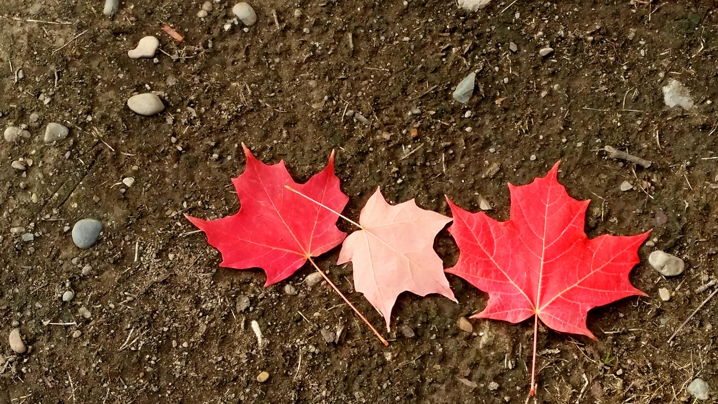Fall - the season of letting go!