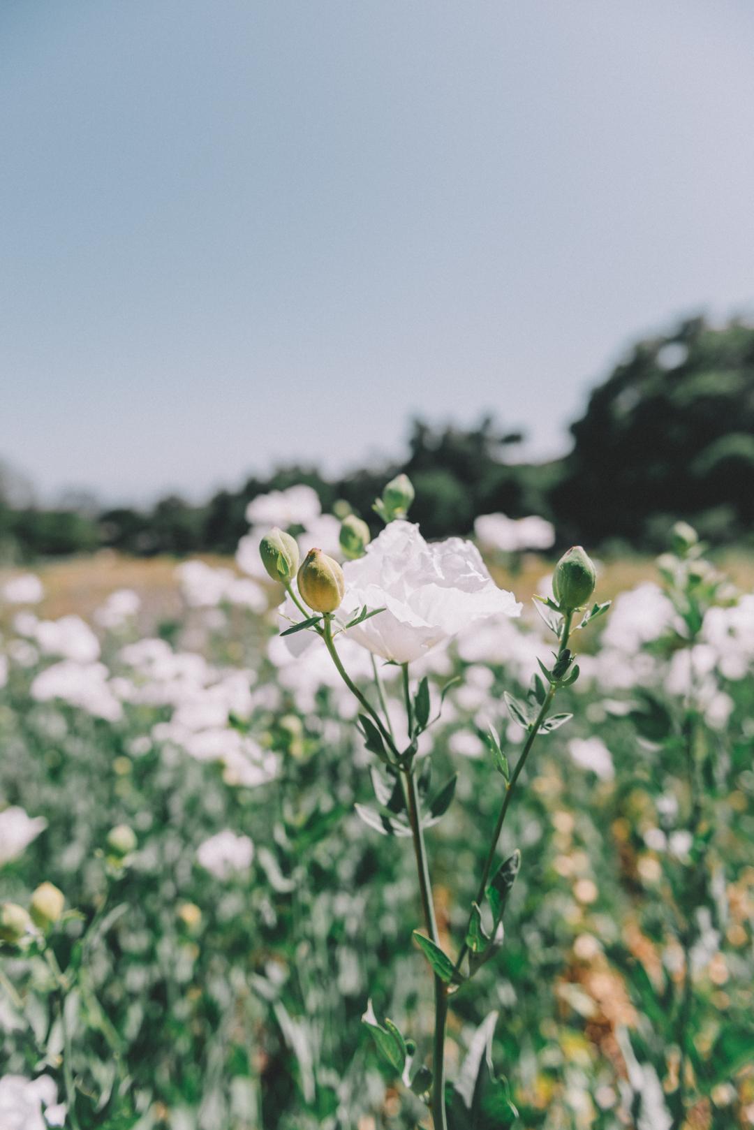 5. Hike at the Botanic Garden - A Historic Landmark