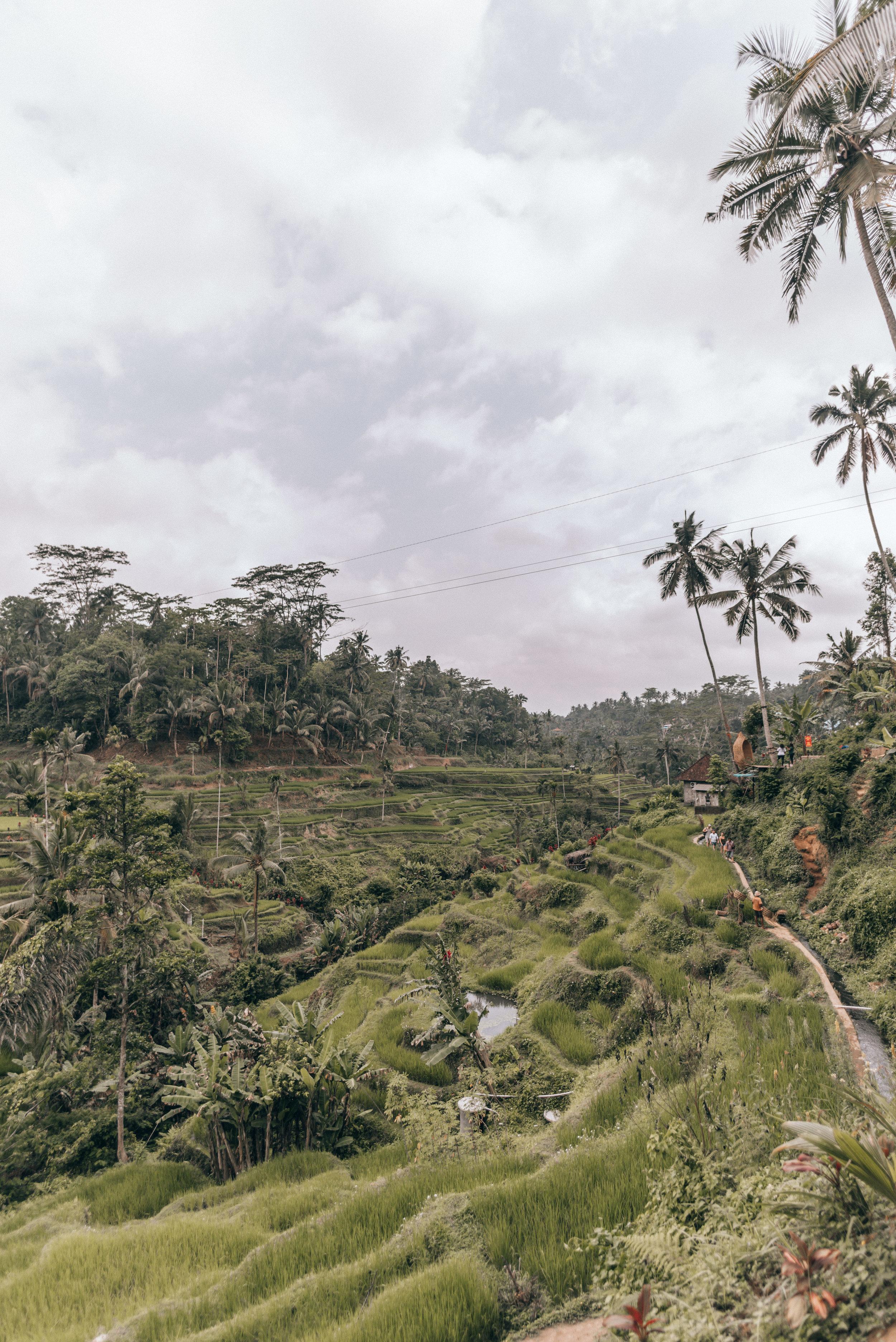 tegalalang-rice-terrace-by-lisa-linh