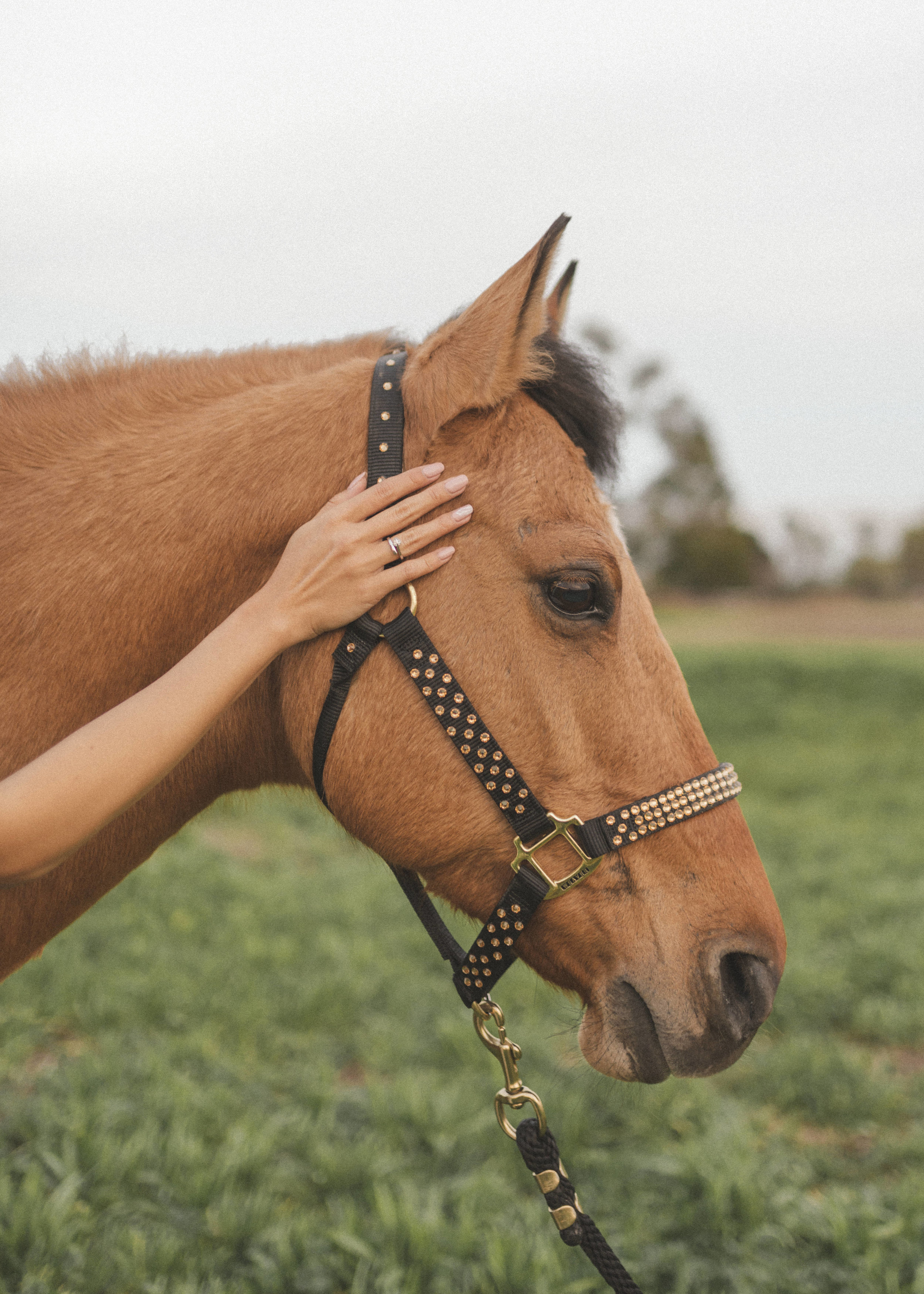 horse-photoshoot-by-lisa-linh