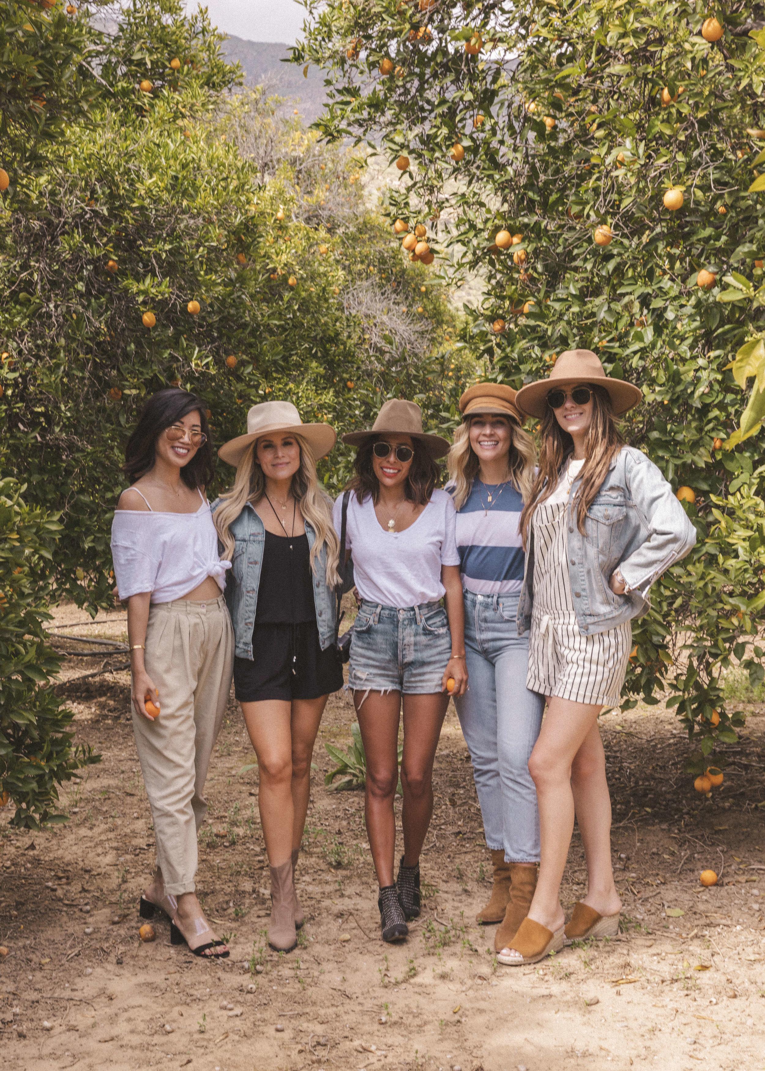 Orange Groves in Ojai