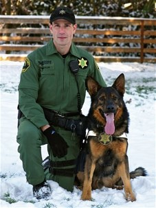 Deputy Dog (Canine Ride-along)