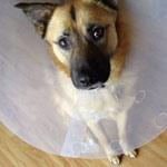 Should You Buy Pet Insurance?