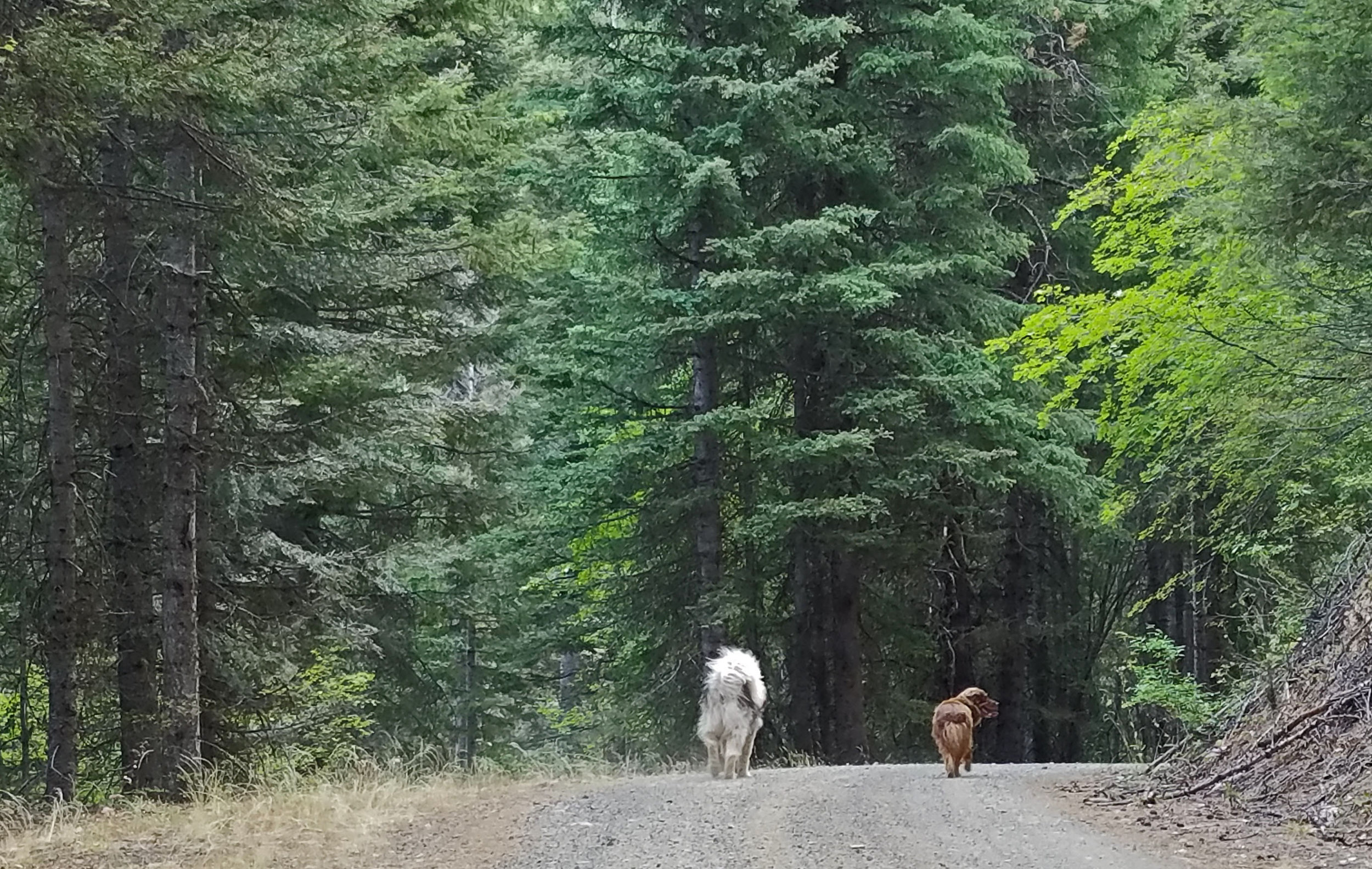 Heading into the forest.