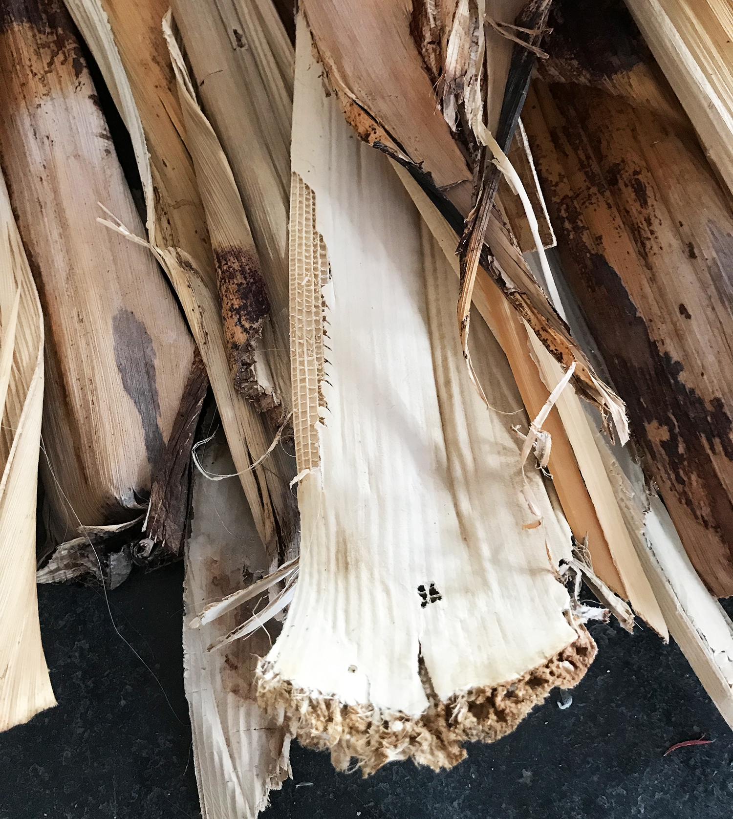 Banana bark, the raw material for basket weaving.