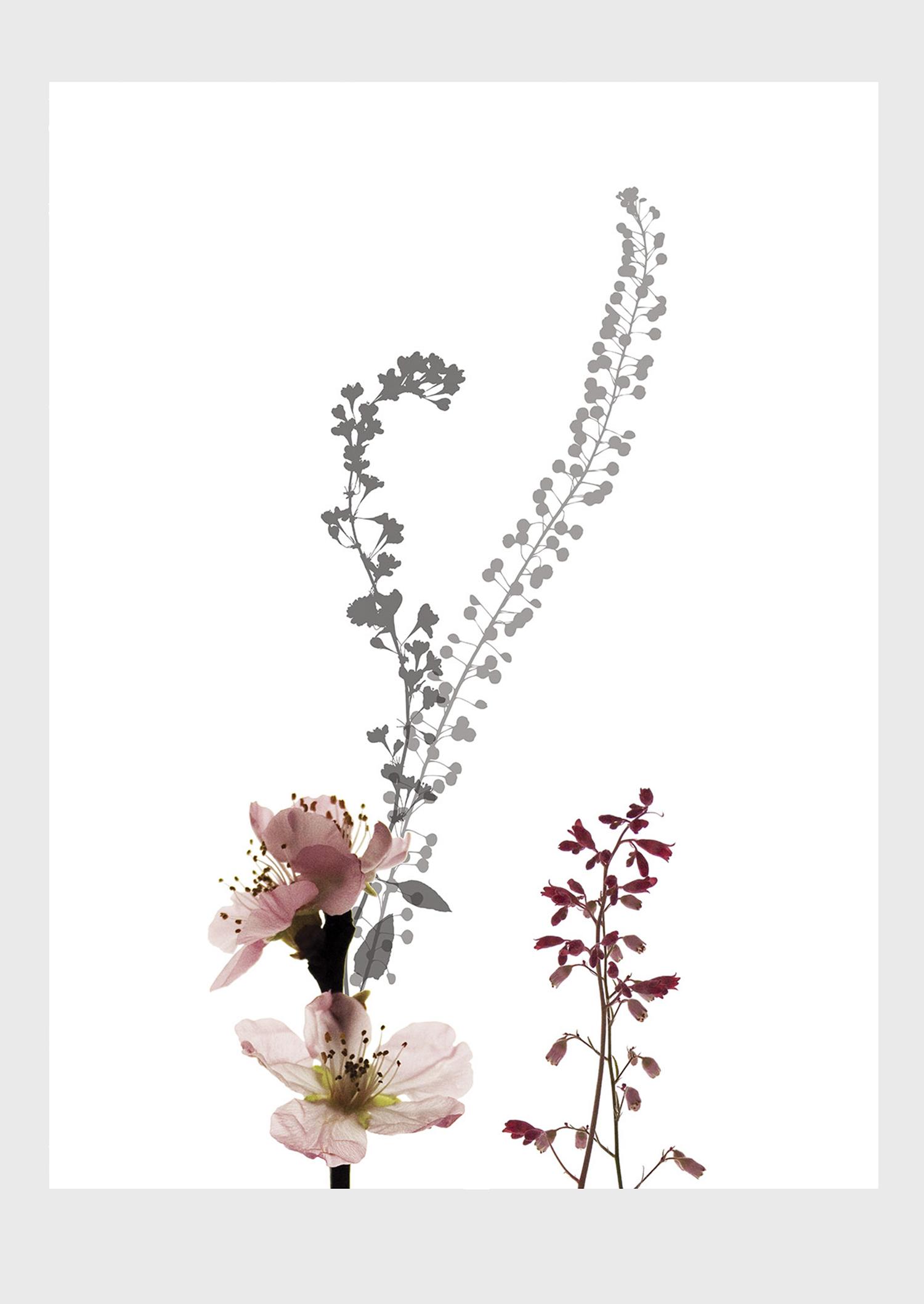 blossom_main.jpg