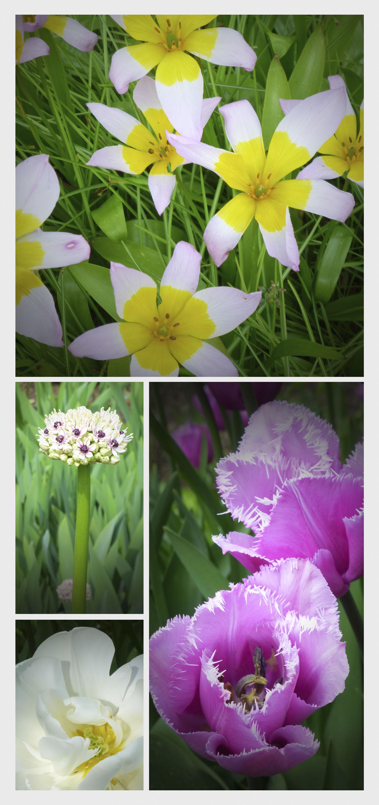 Sissinghurst_floral