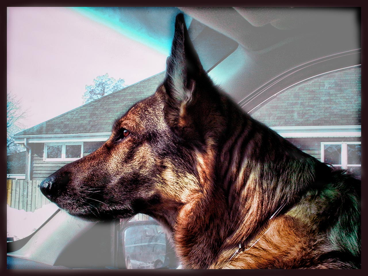 Dedicated to working dogs everywhere and the incredible partnership we have with them.  - Dwyn Tomlinson