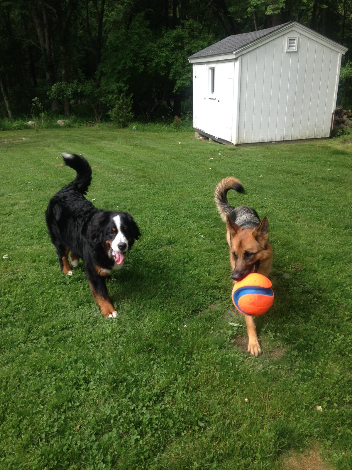 Tuka and Marghee. Best buddies.