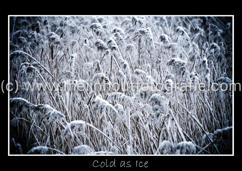 Cold as Ice 2_resize.jpg
