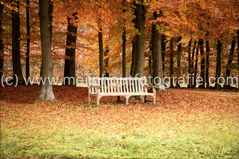 Garden Bench in Autumn Scenery (NL).jpg