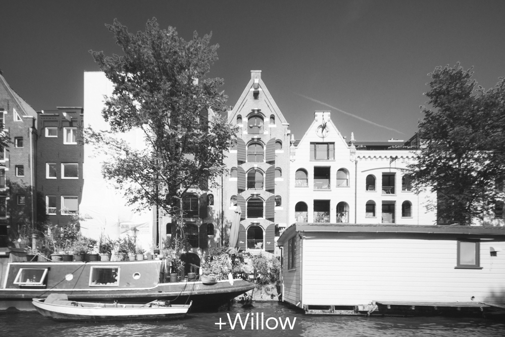 +Willow.jpg