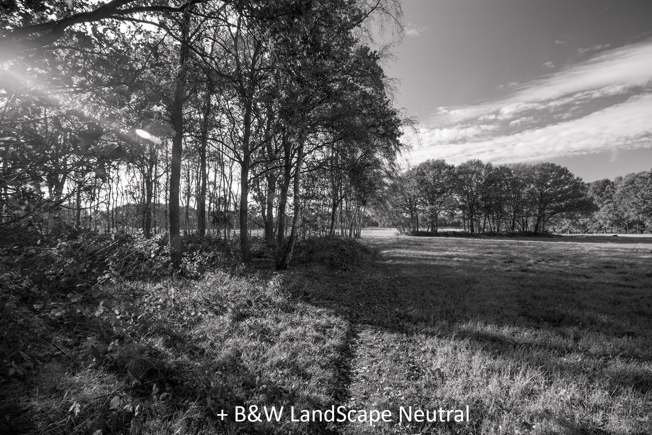 BW LandScape Neutral.jpg