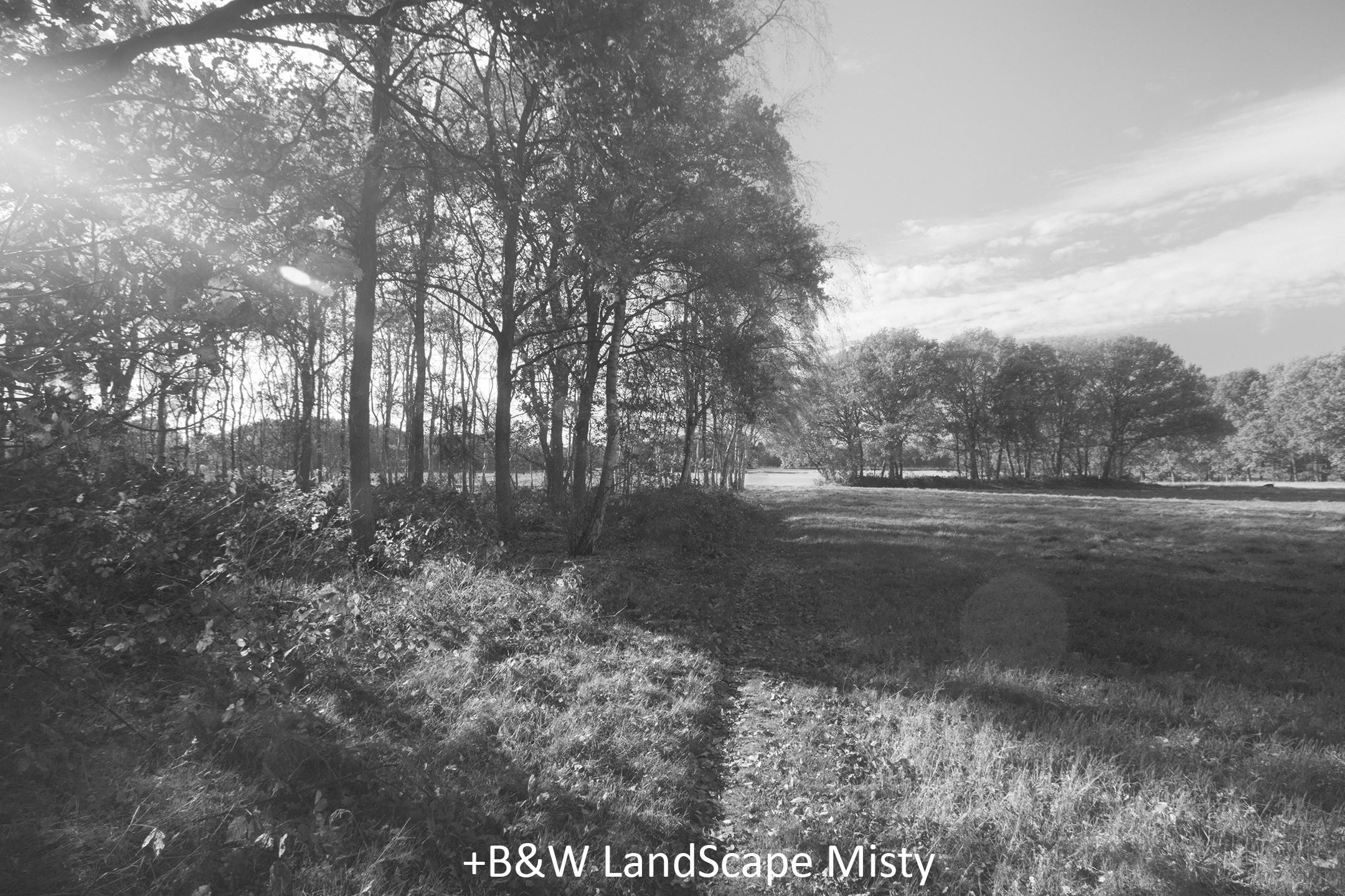 BW LandScape Misty.jpg