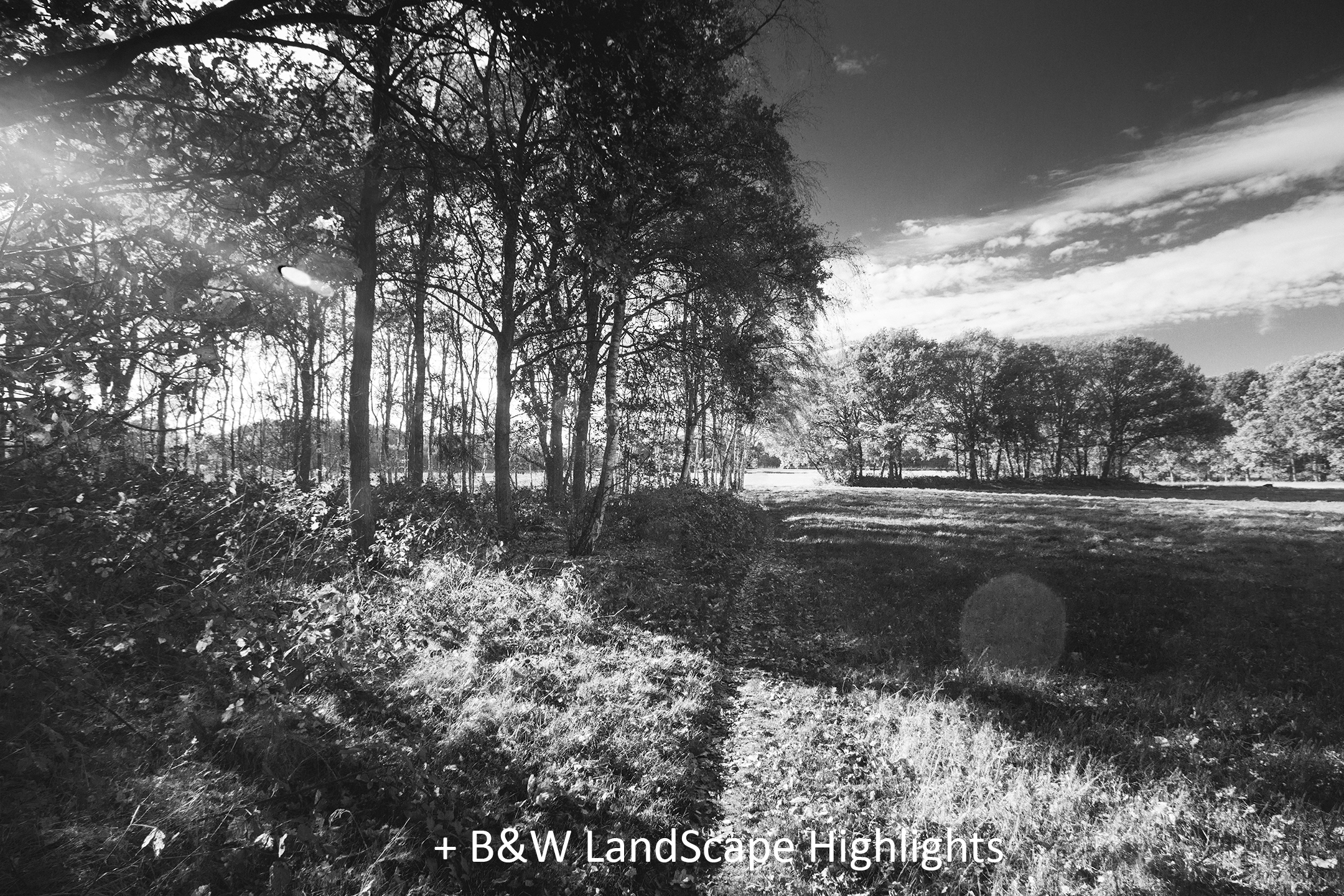 BW LandScape Highlights.jpg