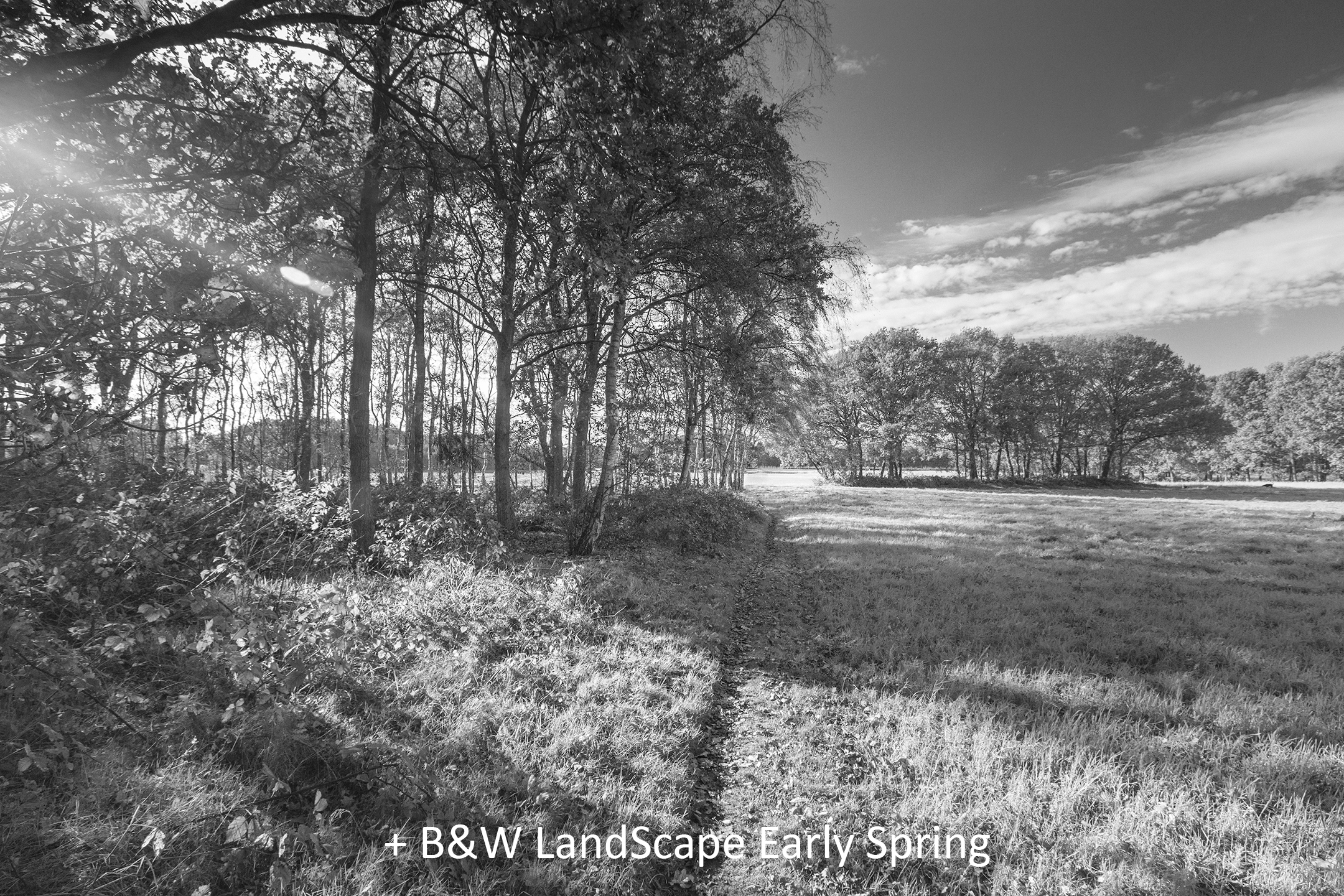 BW LandScape Early Spring.jpg
