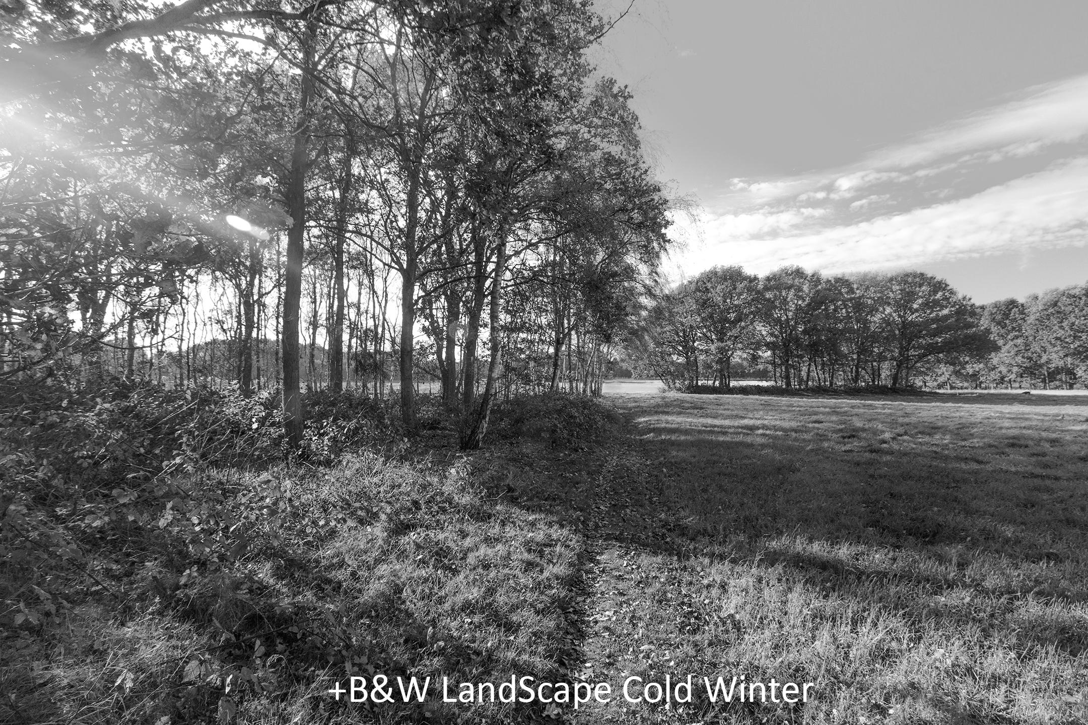 BW LandScape Cold Winter.jpg