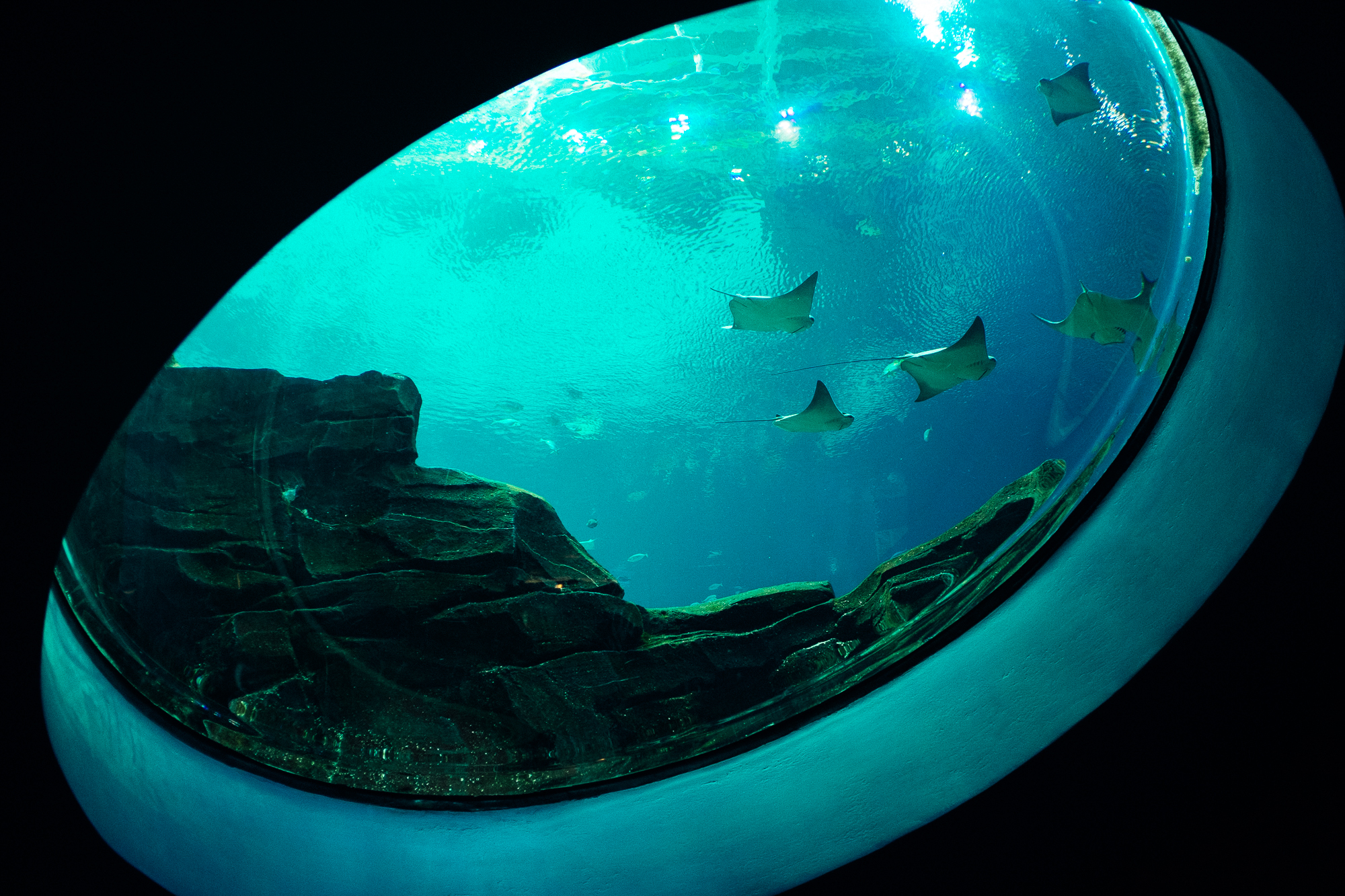 Aquarium-Fujifilm-X100s-6.jpg