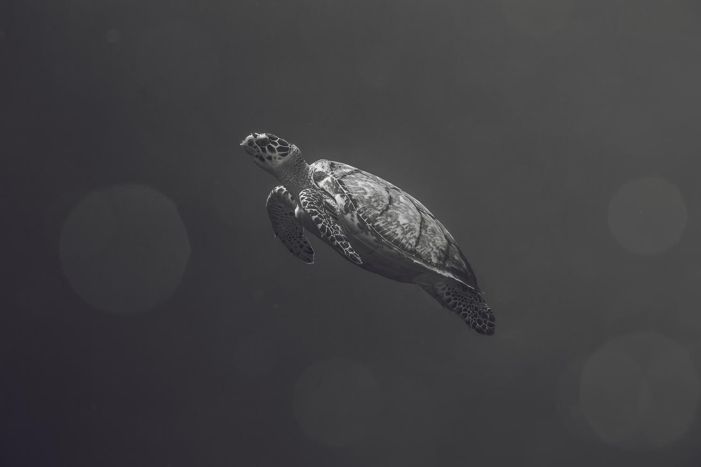 WEBSITE_IN WATER-12.jpg