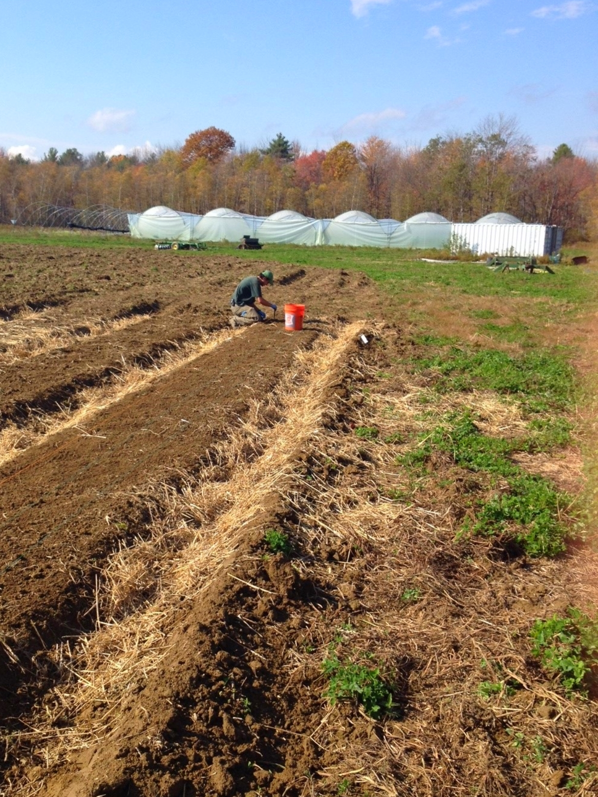 Eric hand-planting the first of many cloves.