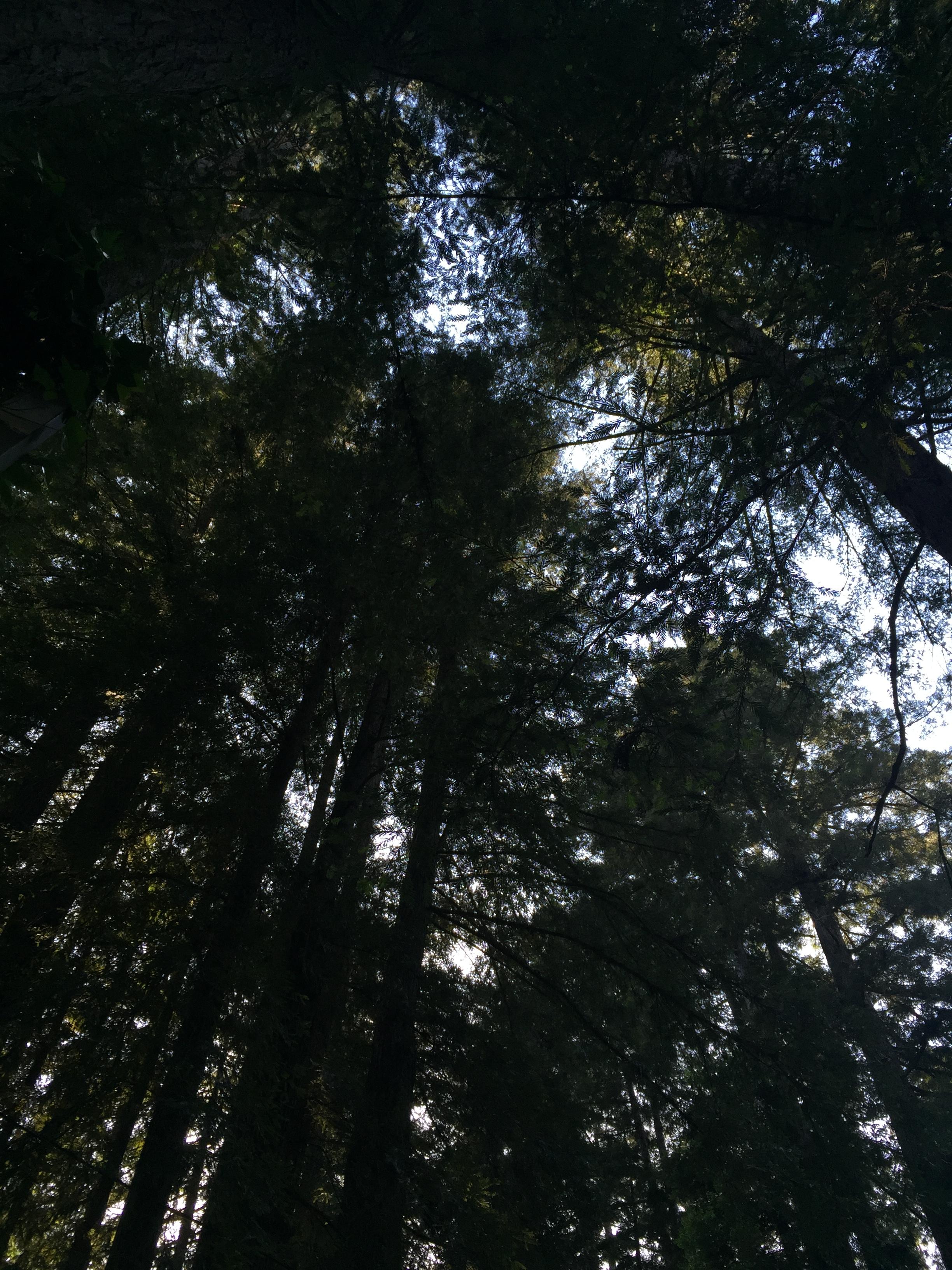 redwoods wellness