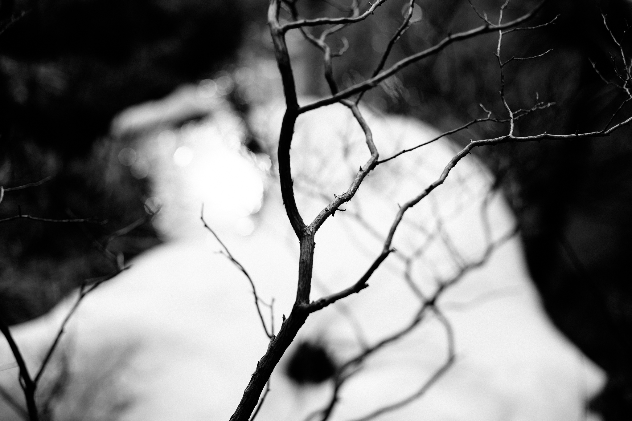 blackandwhite-tree-branch-in-snow