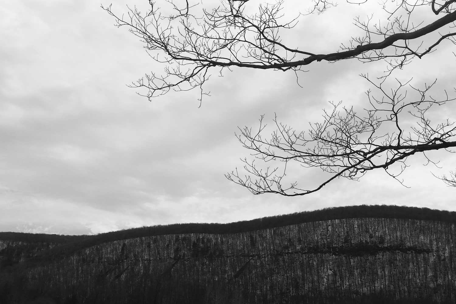 phone-photography-black-and-white-branch-mountain