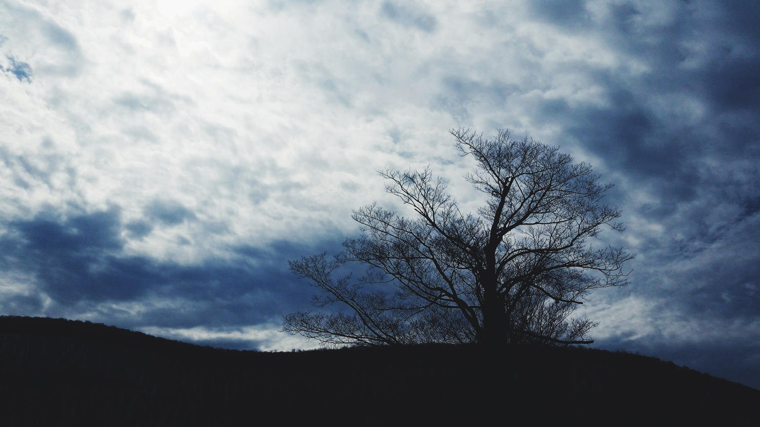 tree-silhouette-blue-cloudy-sky