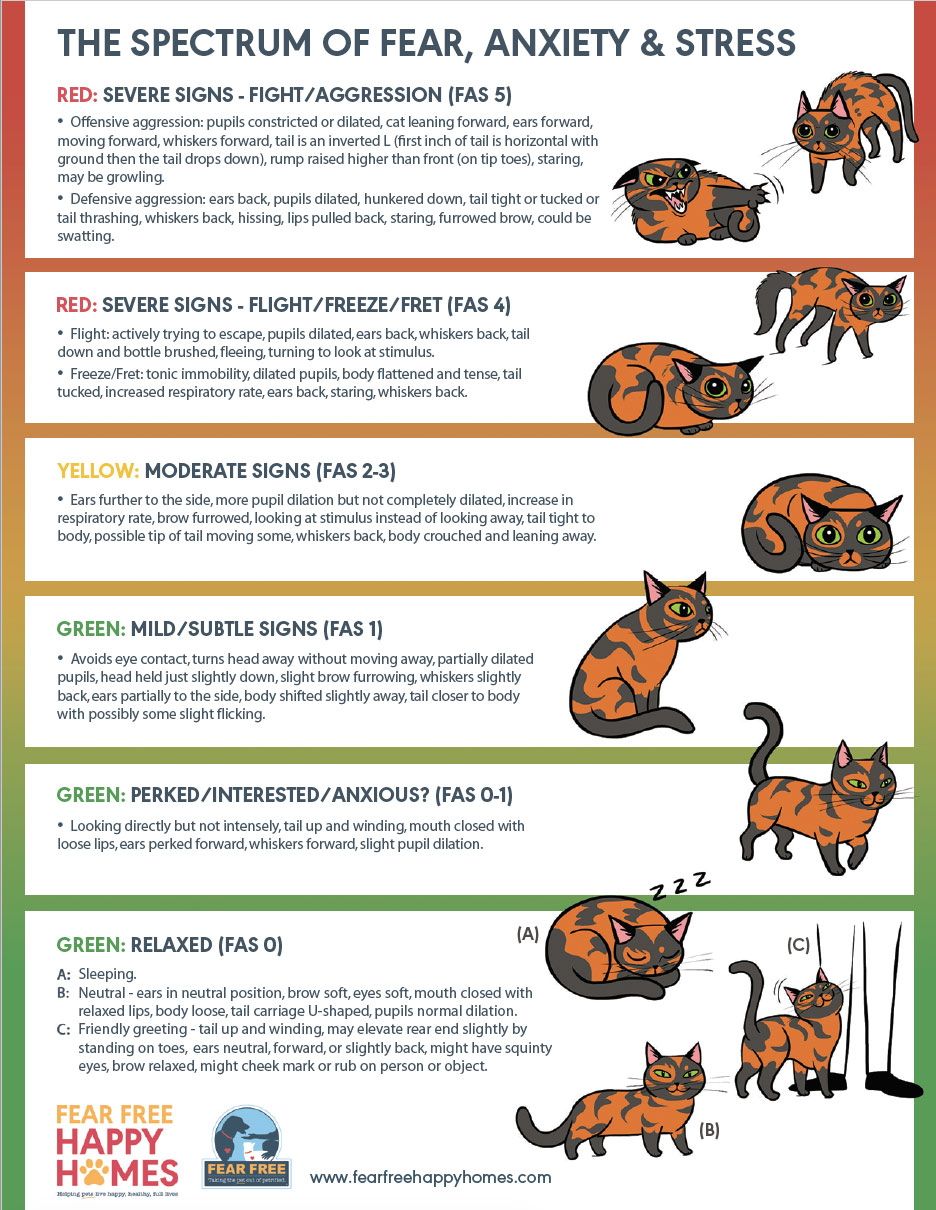 feline-stress-levels.jpg