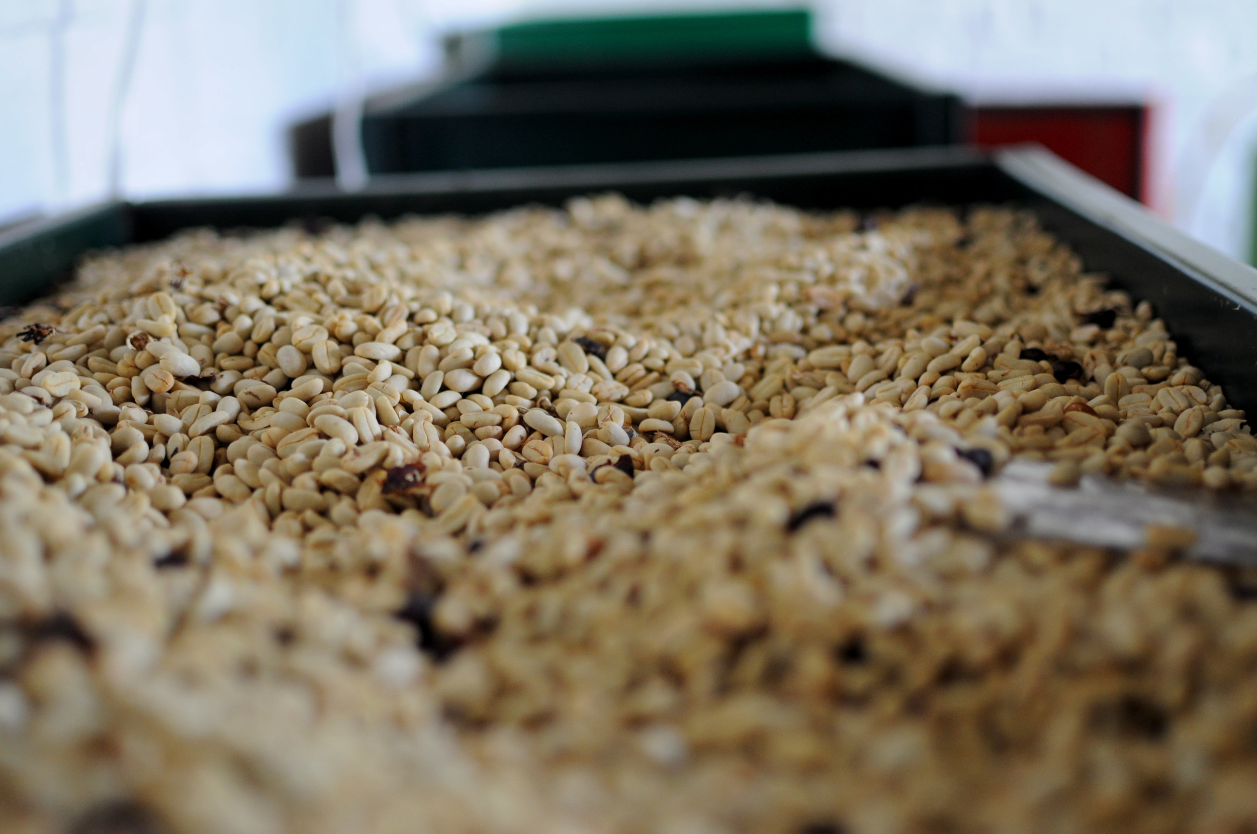 Some coffees are mechanically dried in silos fueled by milled parchment.