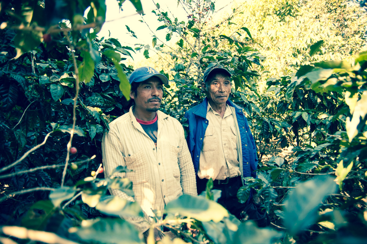 Coffee picking is often a family activity for El Salvadorians, this father and son pick cherries at Finca El Rosario and are required to keep the land clean of debry by the Menendez family. Just another small, but important detail that make the Menendez coffee's stand out.