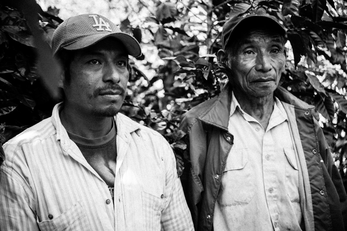 Father and son pause while picking coffee cherries at Finca El Rosario in El Salvador.