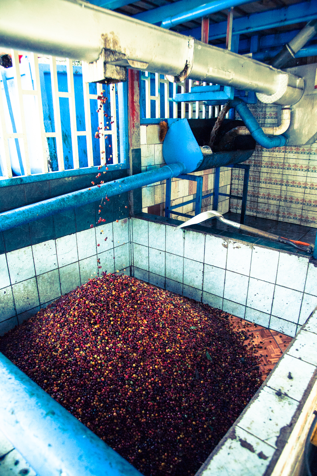 Coffee pulp collects from coffee cherry at the Don Mayo mill.