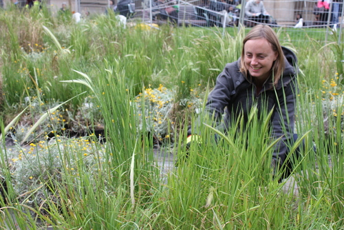 Linda Tegg preparing  Grasslands