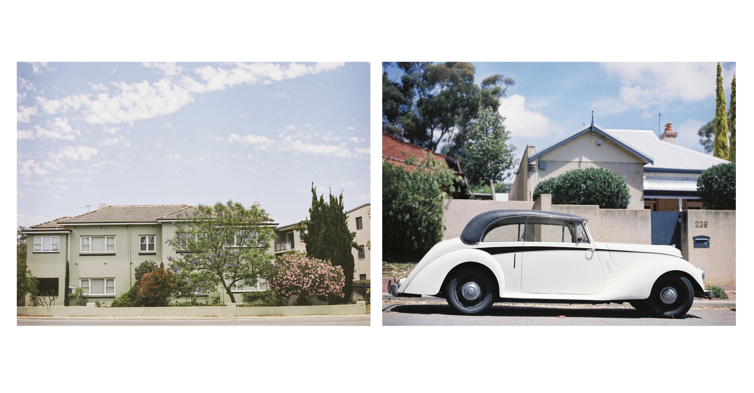 a portrait of cars, photography project