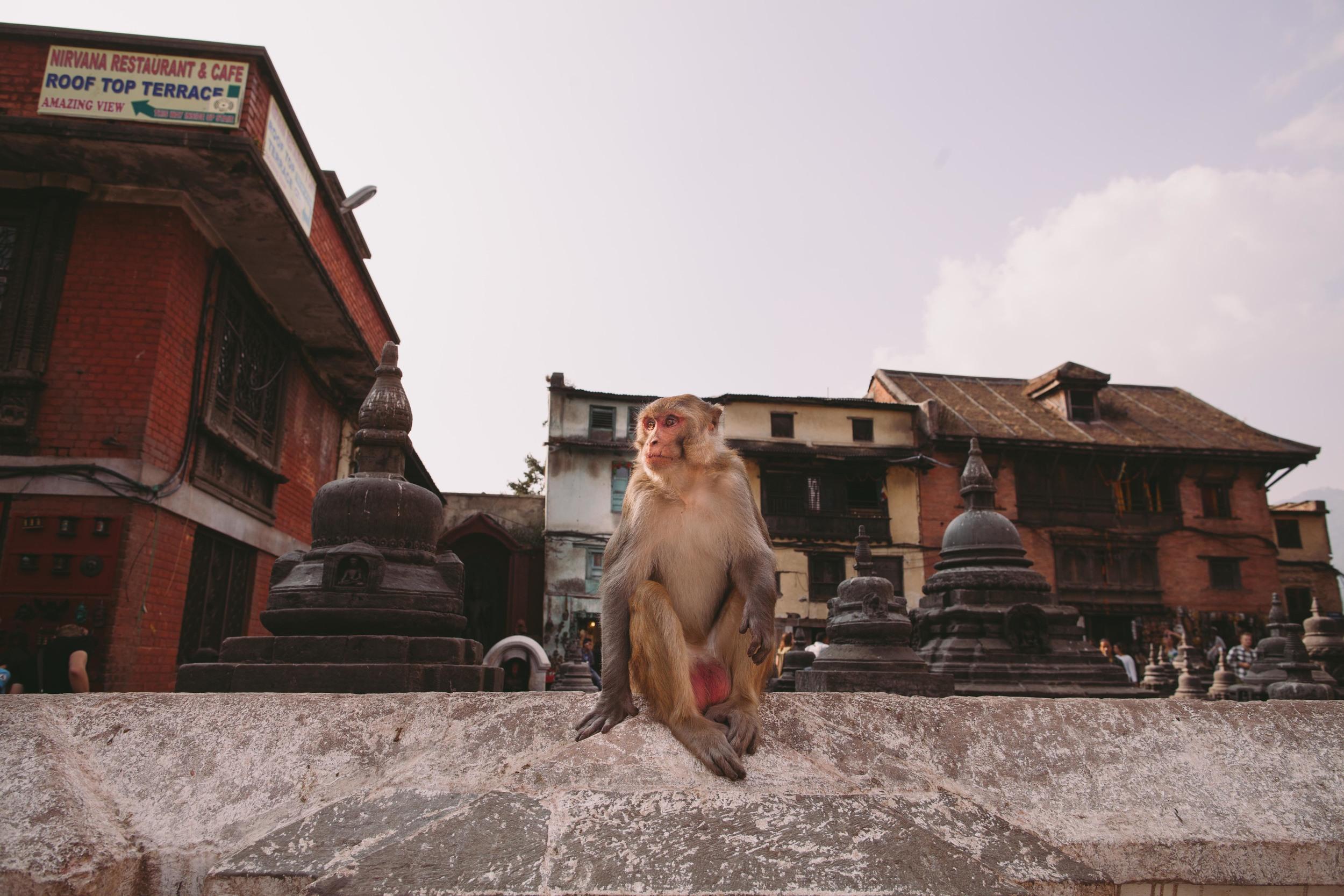 Nepal_110513-44.jpg