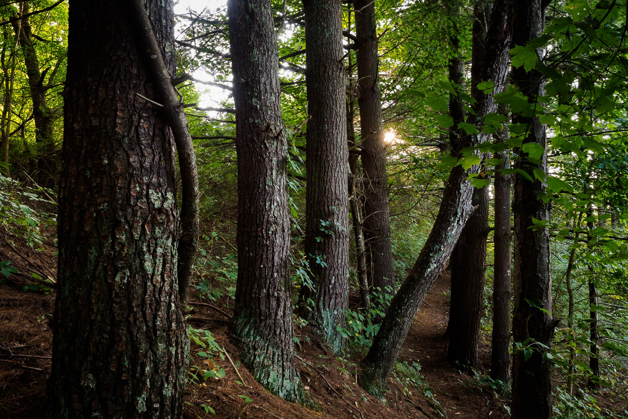 Heritage Park Pines